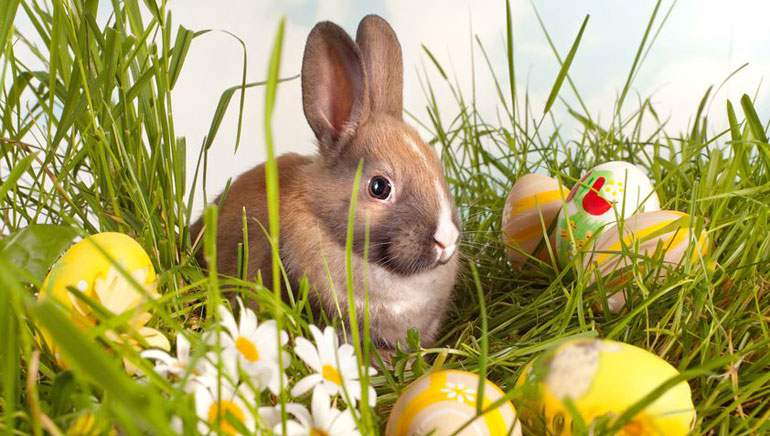 Best 2015 Easter Promotions from Online Casinos