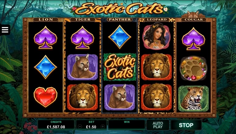 Microgaming Brings Joy to Feline Lovers With New Exotic Cats Slot